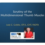 Scrutiny of the Multidimensional Thumb Muscles