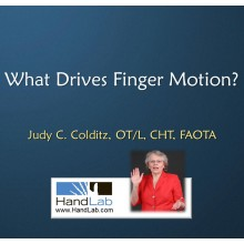 What Drives Finger Motion
